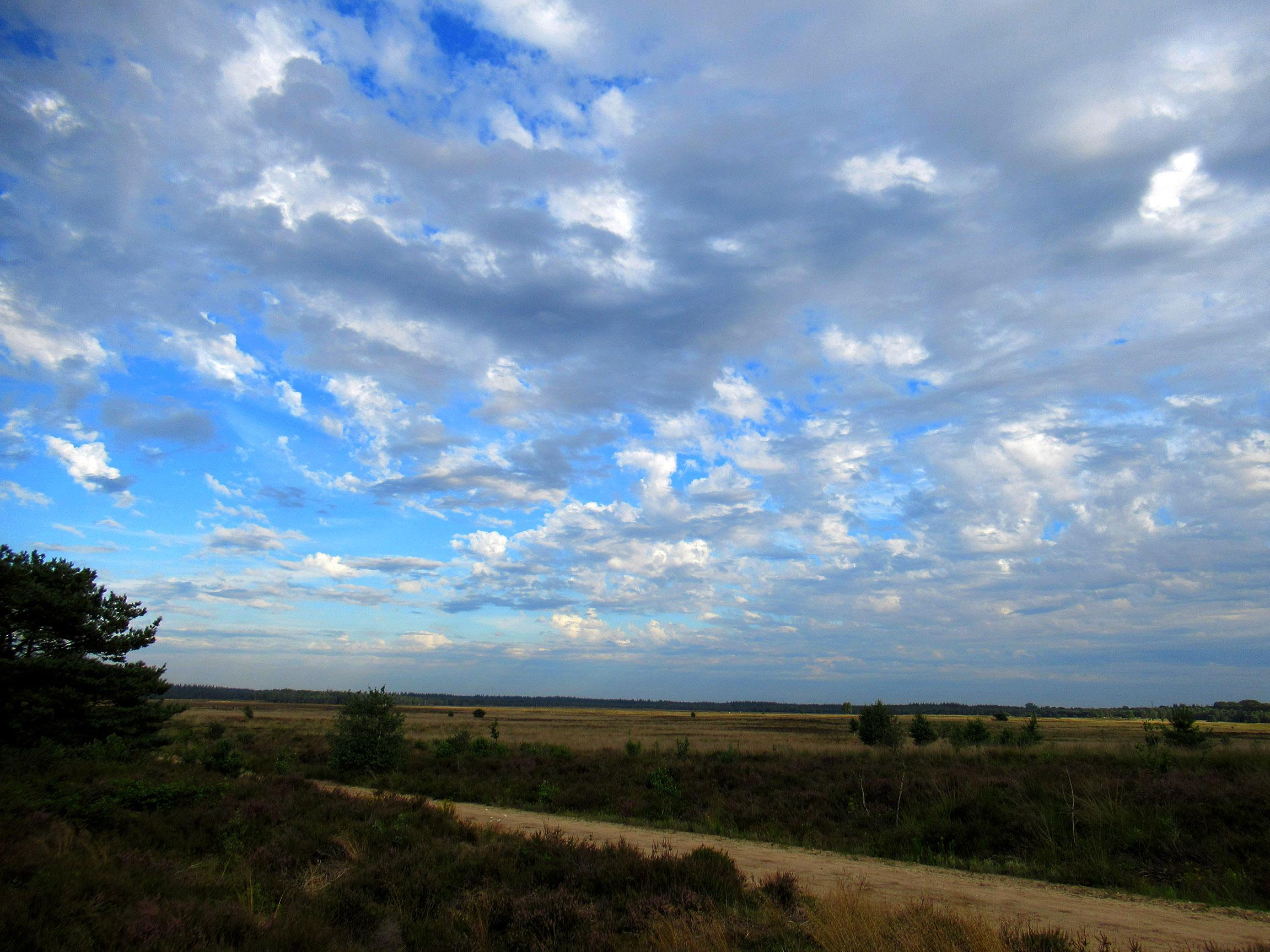Een mooi gezicht over de uitgestrekte Ginkelse Heide - Foto: ©Louis Fraanje