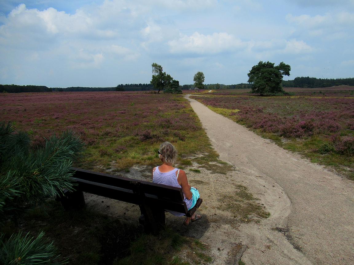 Het is goed rusten op het houten bankje in de heide, met in de verte de schaapskooi - Foto: ©Louis Fraanje