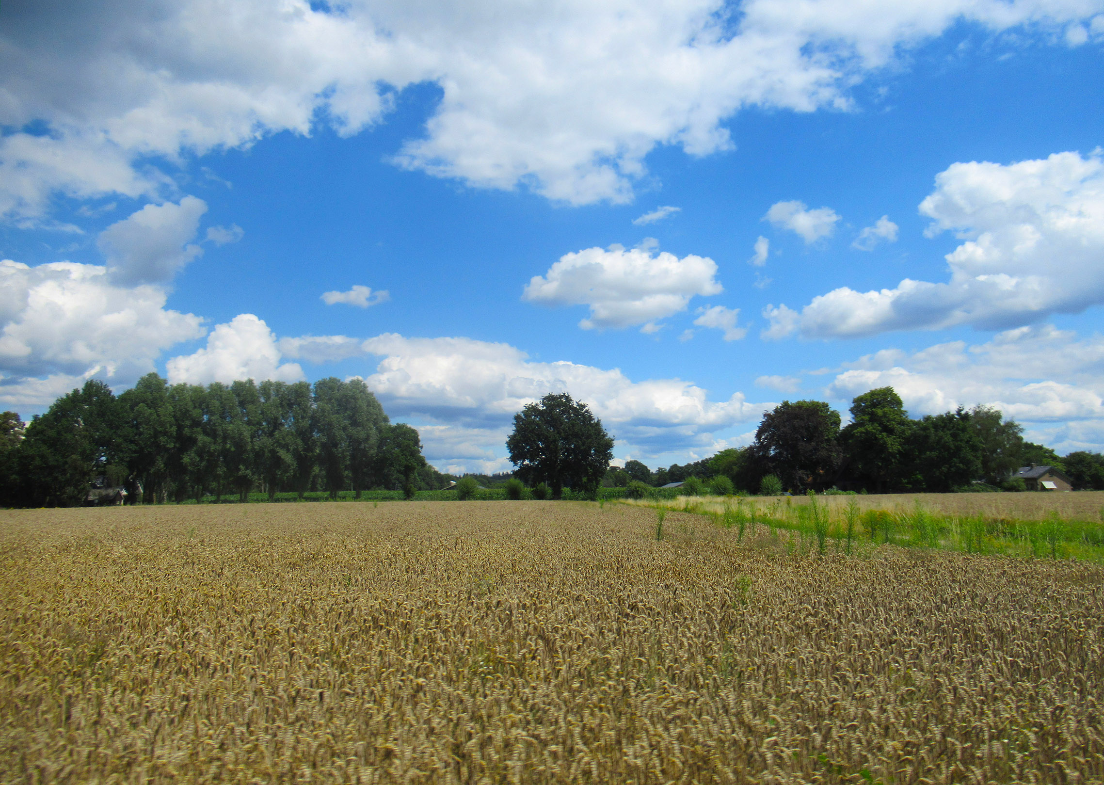 Korenvelden ter hoogte van de Oude Arnhemseweg bij Lunteren - Foto: © Louis Fraanje