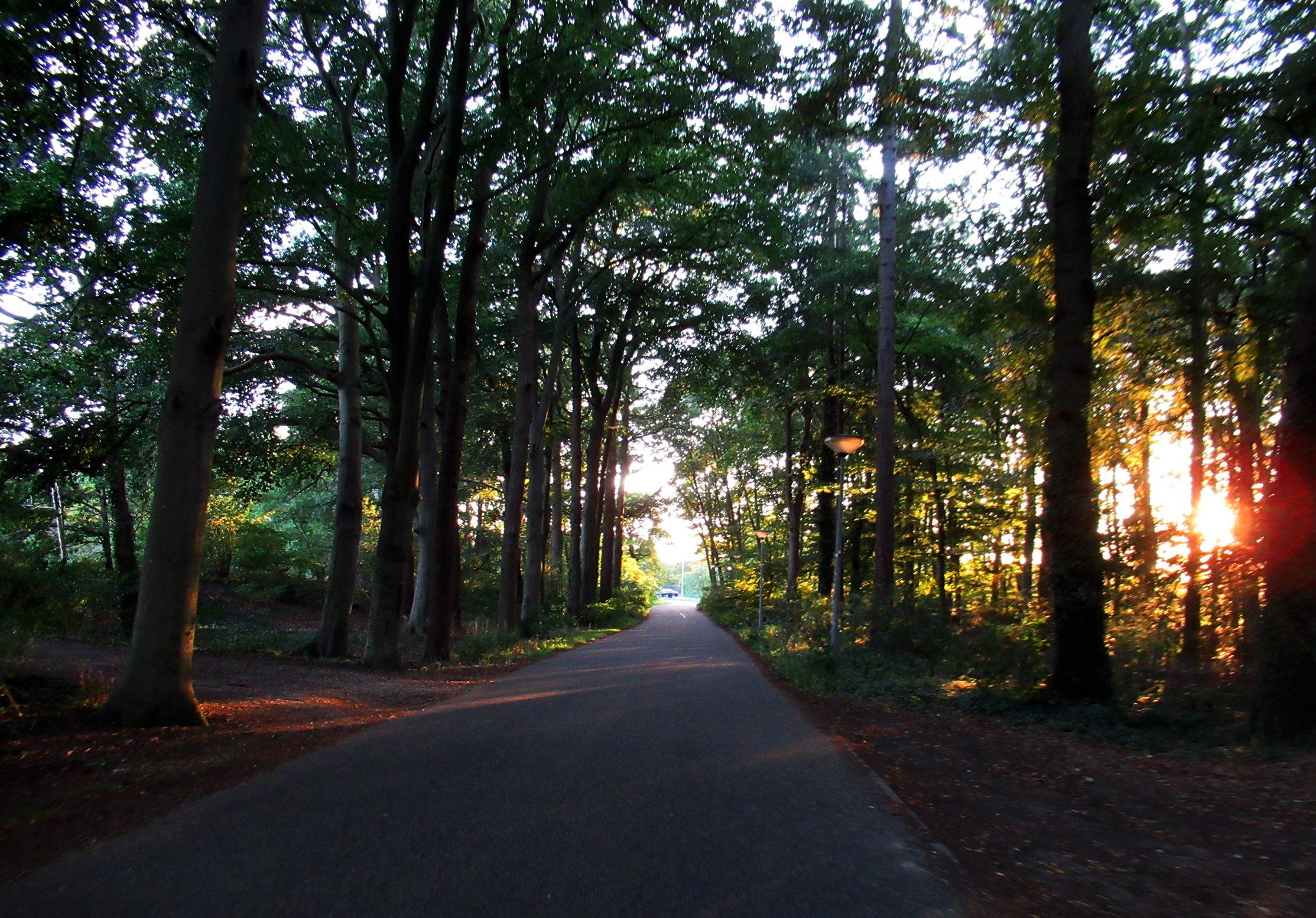 Nog het laatste stukje door het bos richting de Bovenbuurtweg - Foto: ©Louis Fraanje