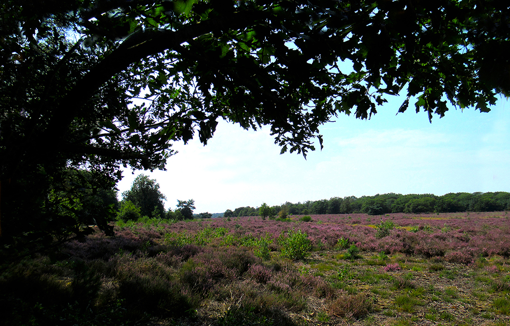 Prachtig doorkijkje op de Noorder Heide bij Vierhouten - Foto: ©Louis Fraanje