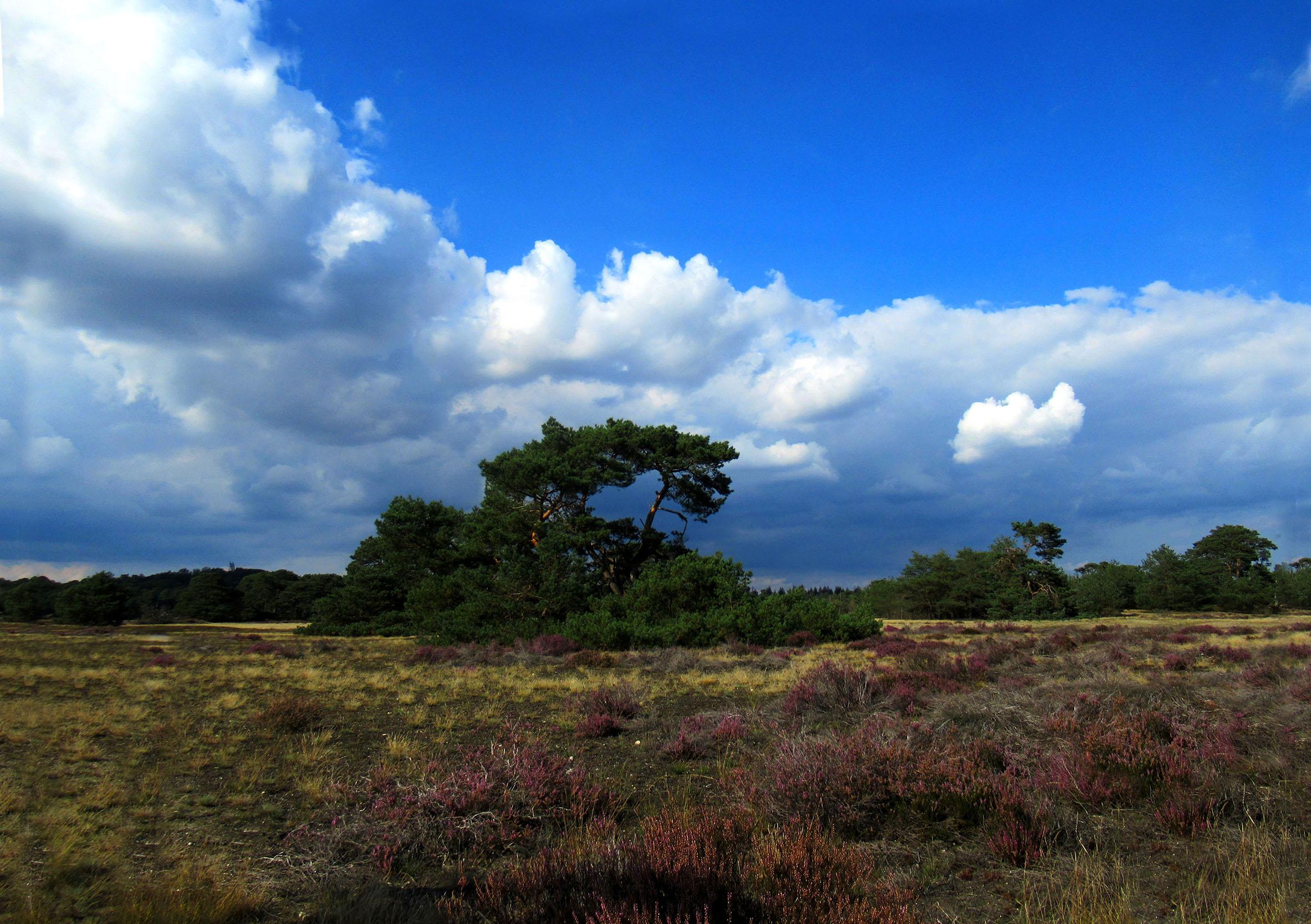 Prachtige wolkenluchten die langs een helderblauwe hemelvoorbij schoven – Foto: ©Fransien Fraanje