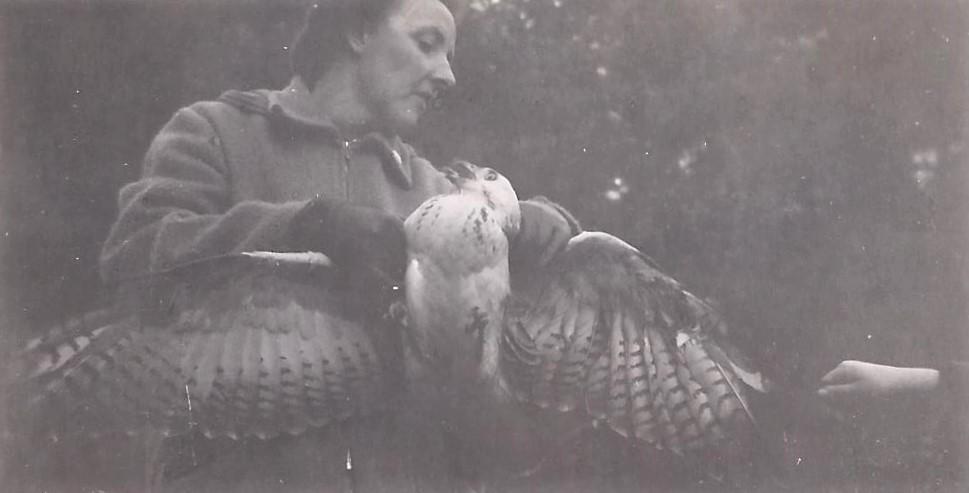 Mijn moeder en de buizerd kijken elkaar diep in de ogen. Ze probeerde het dier gerust te stellen. Kansloos natuurlijk. Ik steek ook nog een handje uit - Foto: Archief Henk Stel