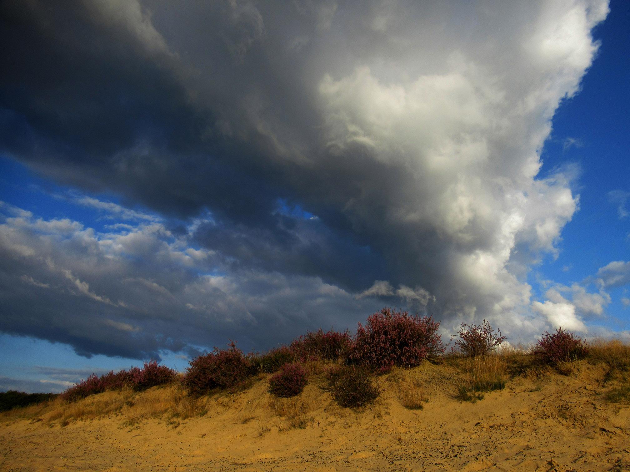 De Veluwe is nu op haar mooist, bloeiende heide op een zandheuvel, met een prachtige wolkenlucht als decor! De foto vanuit een zeer laag standpunt gemaakt. Zo bijzonder is dit, het leek wel een vulkaanuitbarsting van wolken boven de heuvel in het stuifzand! - Foto: ©Louis Fraanje