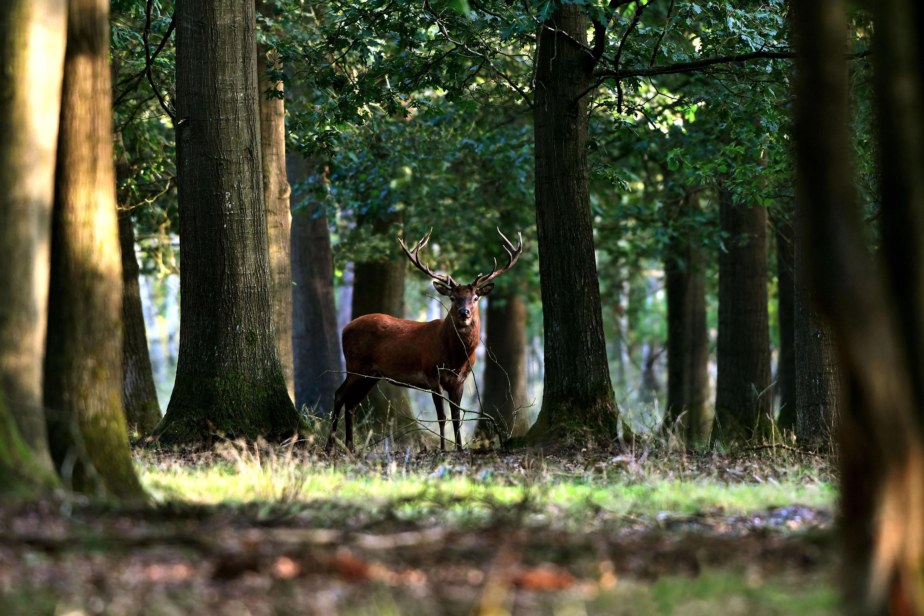 Ineens verschijnt er een oneven 16-ender tussen de bomen in het bos – Foto: ©Louis Fraanje