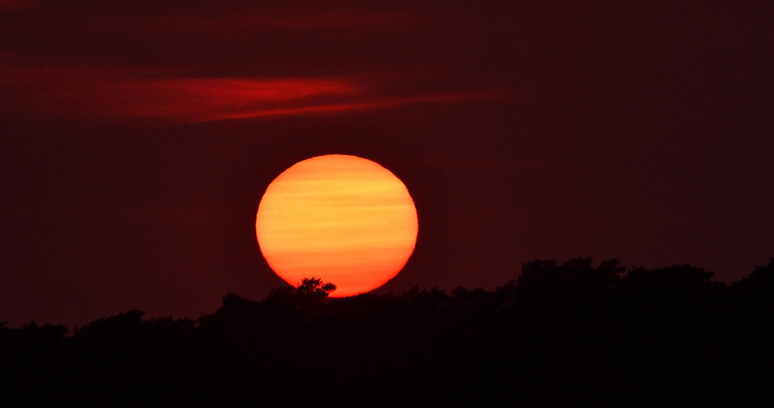De avondzon zakt langzaam maar zeker achter de bosrand - Foto: ©Louis Fraanje