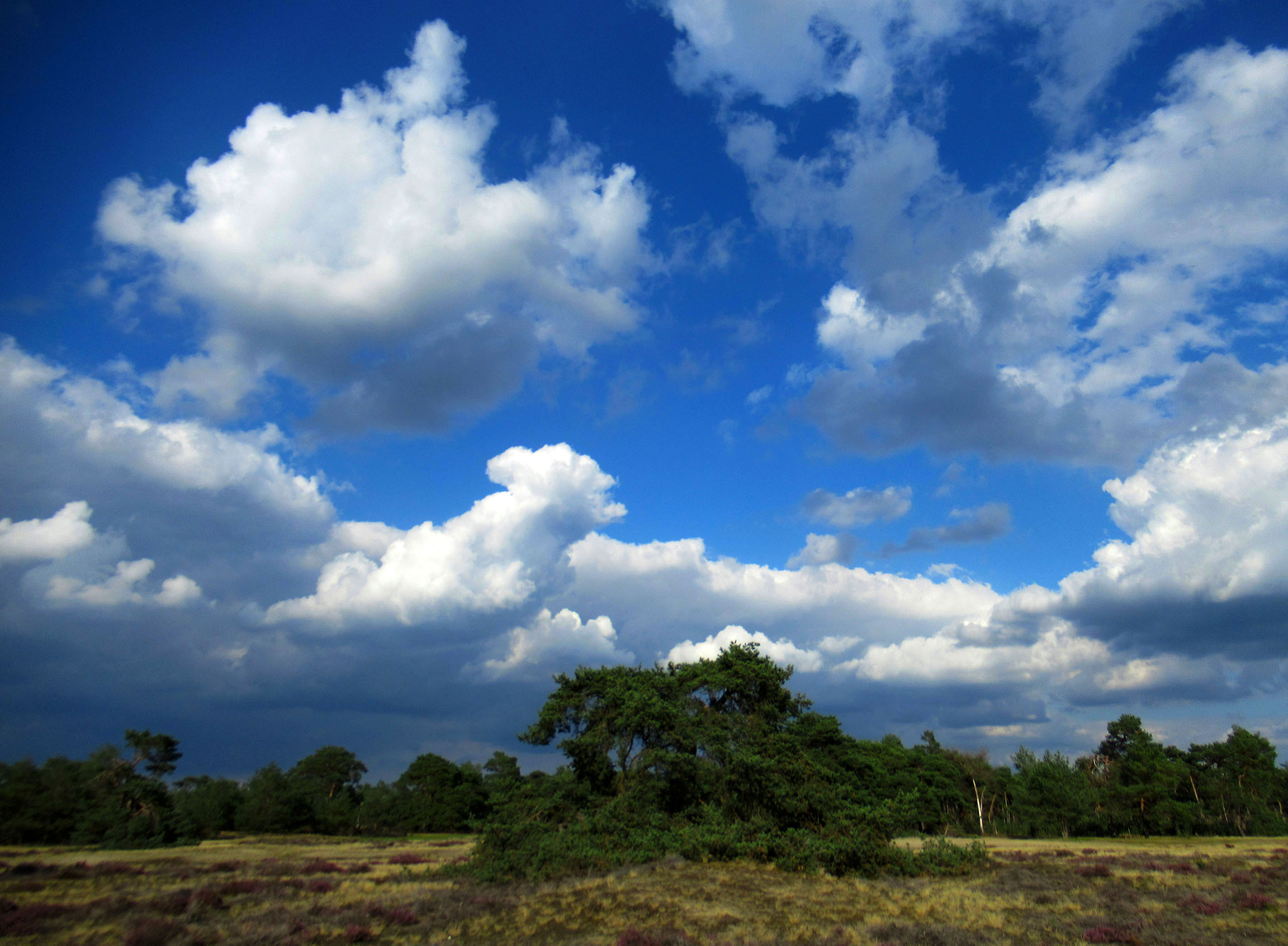 Bij zulke mooie wolkenluchten kun je je fantasie de vrije loop laten – Foto: ©Louis Fraanje