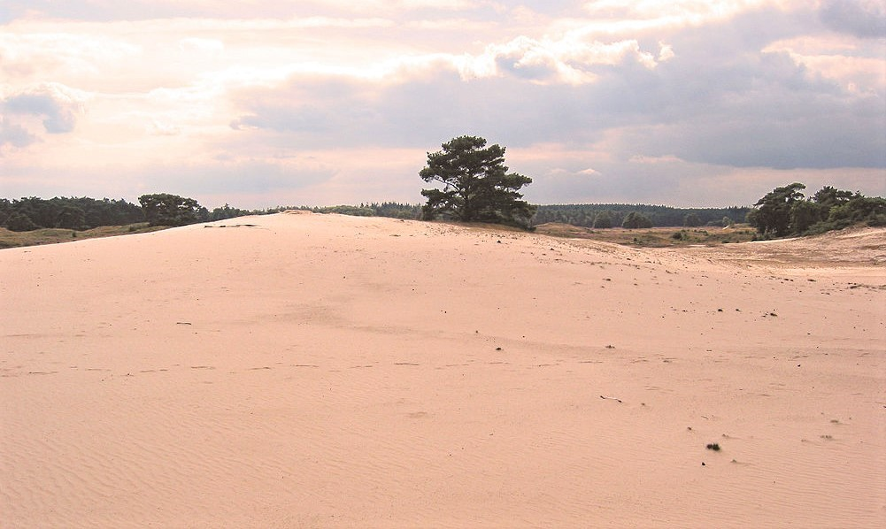 "Het ""Wekeromse Zand"" in 2007 - Foto: Archief Henk Stel"