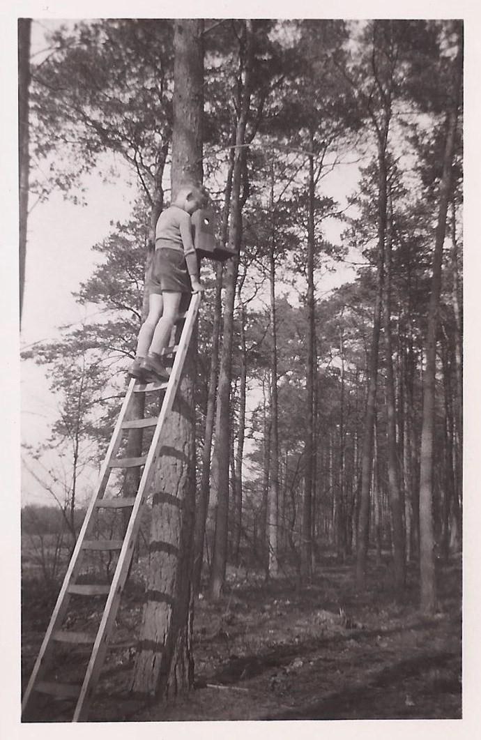 Ede, De Sijsselt. voorjaar 1955. Ik neem een kijkje in een nestkast - Foto: Archief Henk Stel