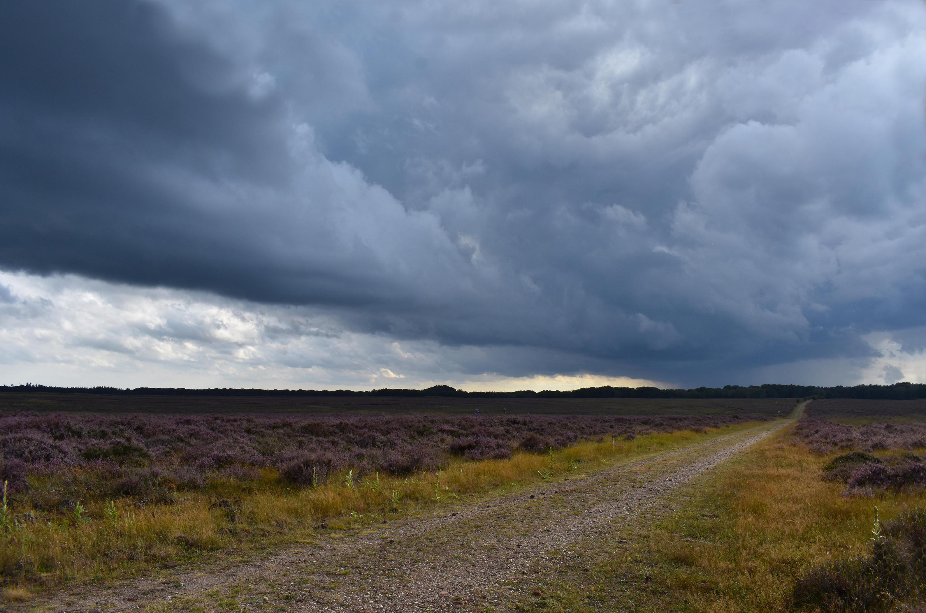 Donkere wolkenlucht boven de bloeiende heide van het Oud Reemster Veld op de Hoge Veluwe - Foto: ©Louis Fraanje