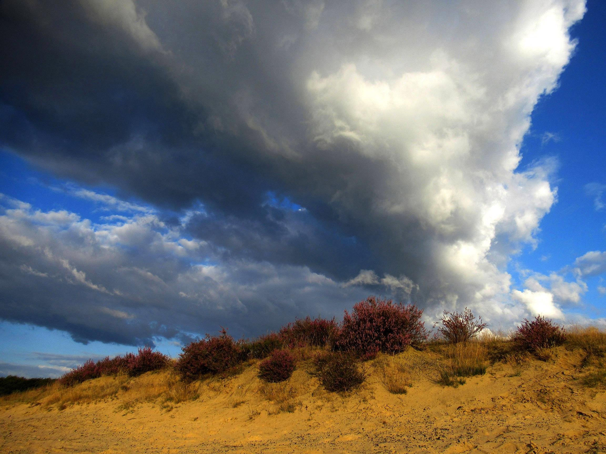 Bloeiende heide op een zandheuvel, met een prachtige wolkenlucht als decor! - Foto: ©Louis Fraanje