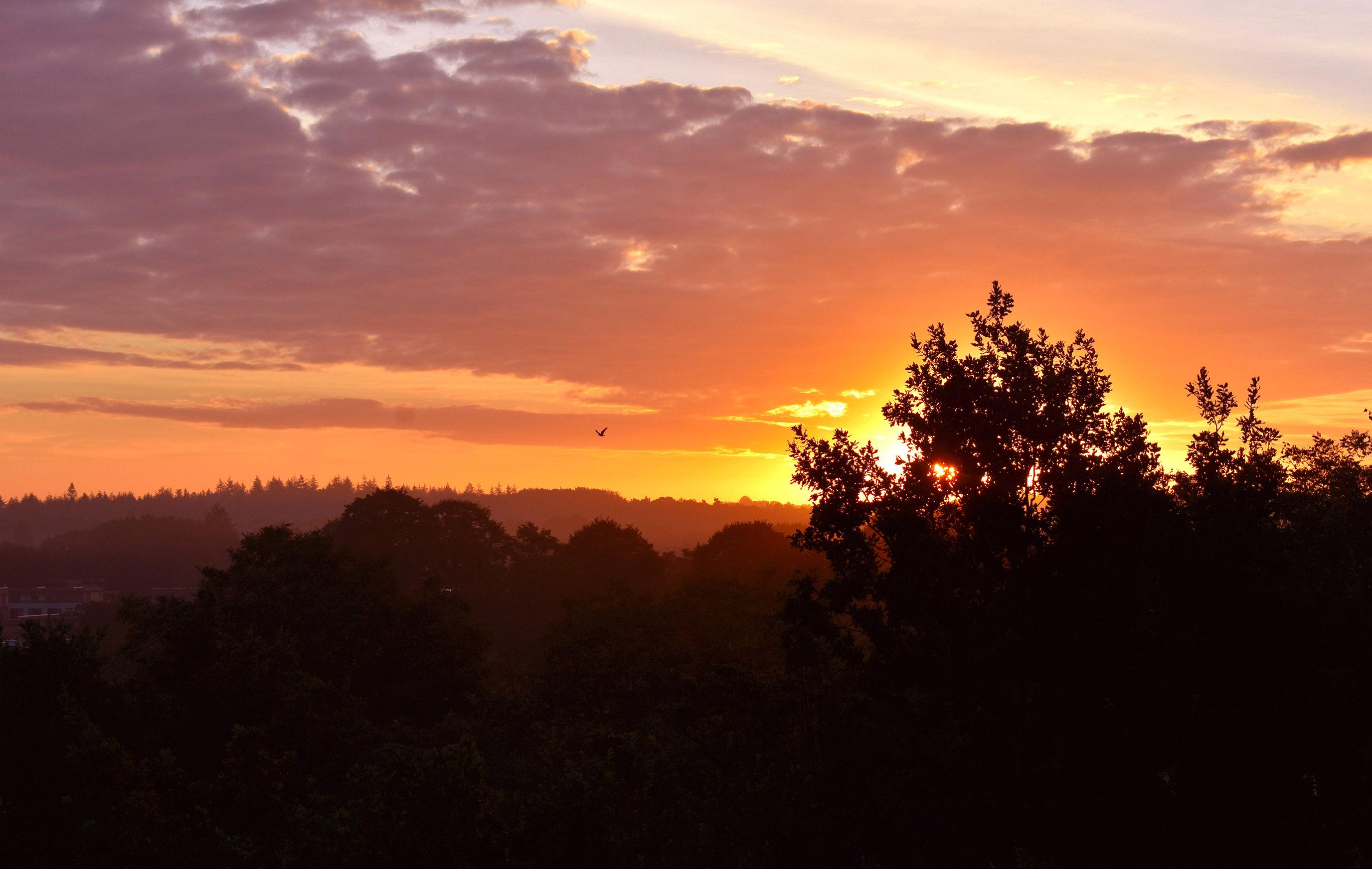 's Morgens in alle vroegte, prachtig zonlicht boven de beboste heuvels van de Veluwe - Foto: ©Louis Fraanje