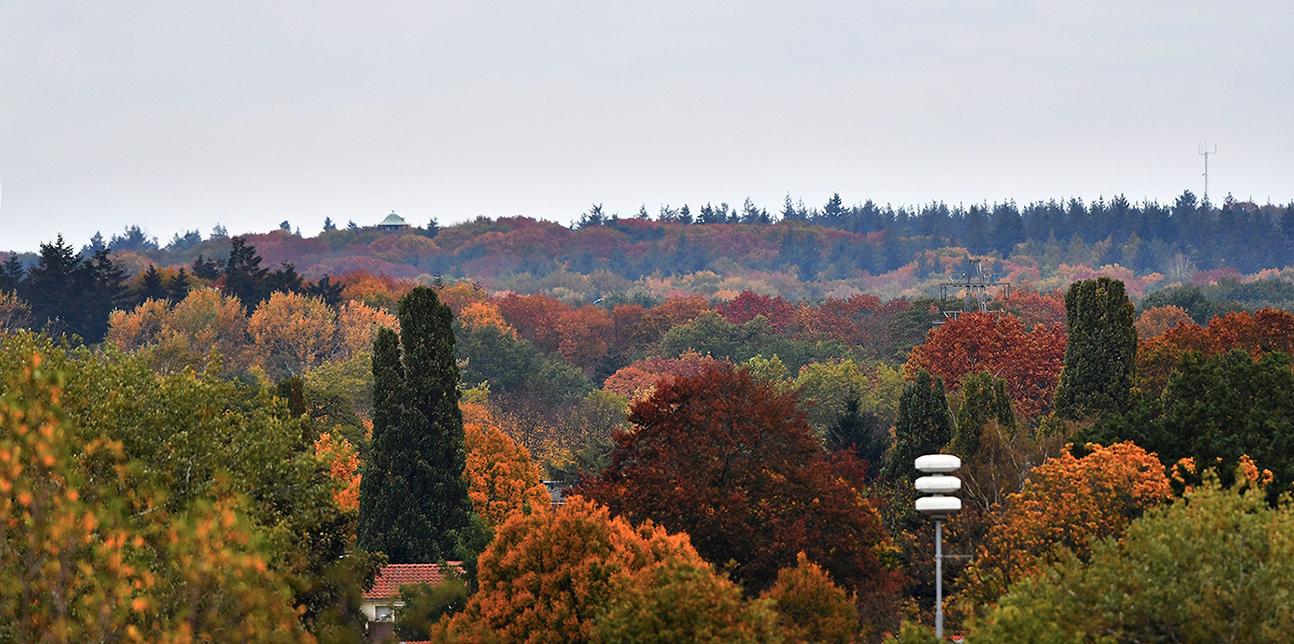 Als we inzoomen, zien we links aan de horizon de hoed van uitkijktoren De Koepel - Foto: ©Louis Fraanje