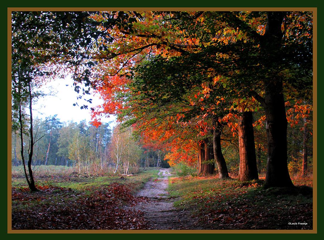 Kleurrijk doorkijkje in het strijklicht op het bospad in de herfst - Foto: ©Louis Fraanje