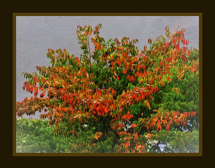 Herfst geeft een prachtig kleurenpalet - Foto: ©Louis Fraanje