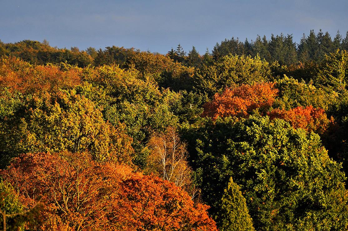 De herfst kleurt de bossen op de Veluwe, wat een weelde - Foto: ©Louis Fraanje