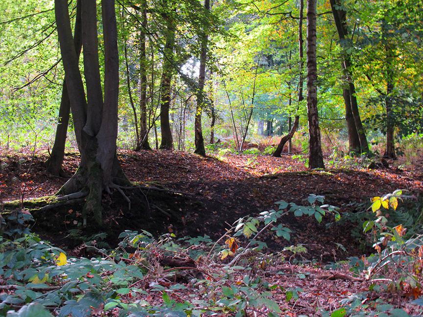 Een klein stukje 'wildernis' in het Schaffelaarse bos - Foto: ©Louis Fraanje
