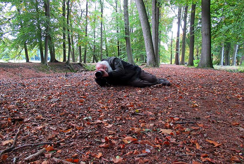 Daar ligt hij weer die oude Barnevelder, zomaar op de grond in het bos – Foto: ©Fransien Fraanje