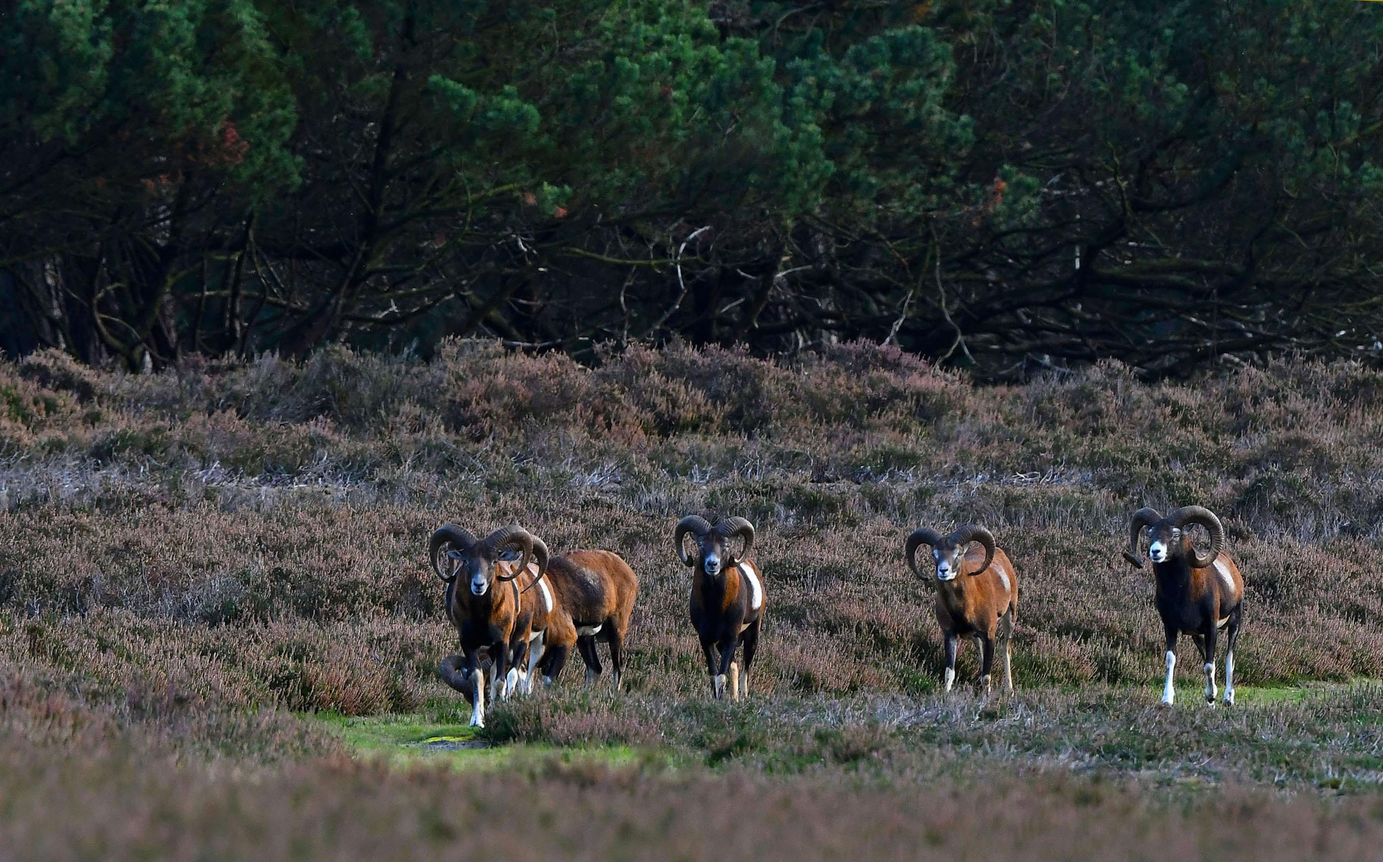 Langzaam maar zeker komen ze dichterbij – Foto: ©Louis Fraanje