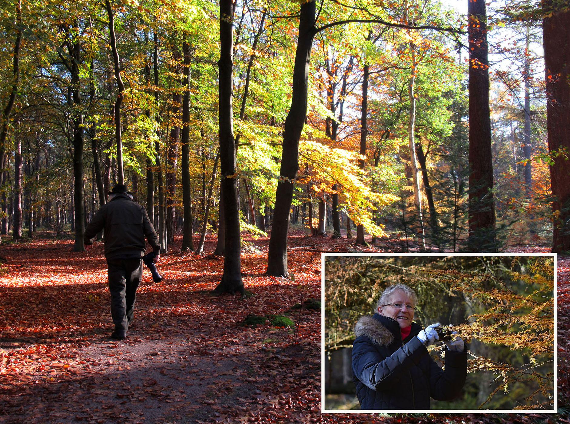 Samen zwerven door het herfstbos met de camera in de hand - Foto: ©Louis en Fransien Fraanje