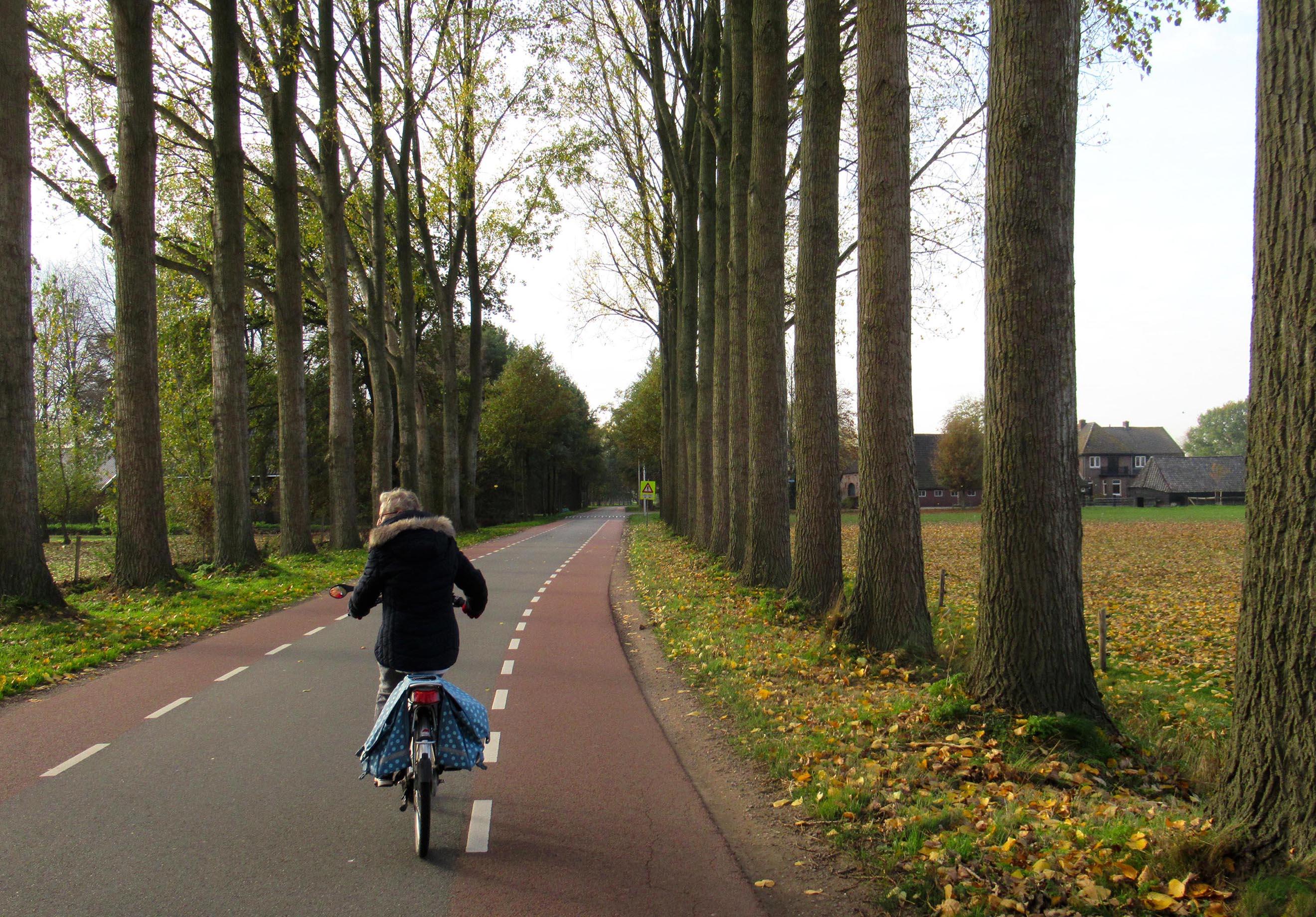 Fransien fietst over de Kraatsweg tussen de hoge populieren met rechts de boerderij Het Eerste Erf – Foto: ©Louis Fraanje