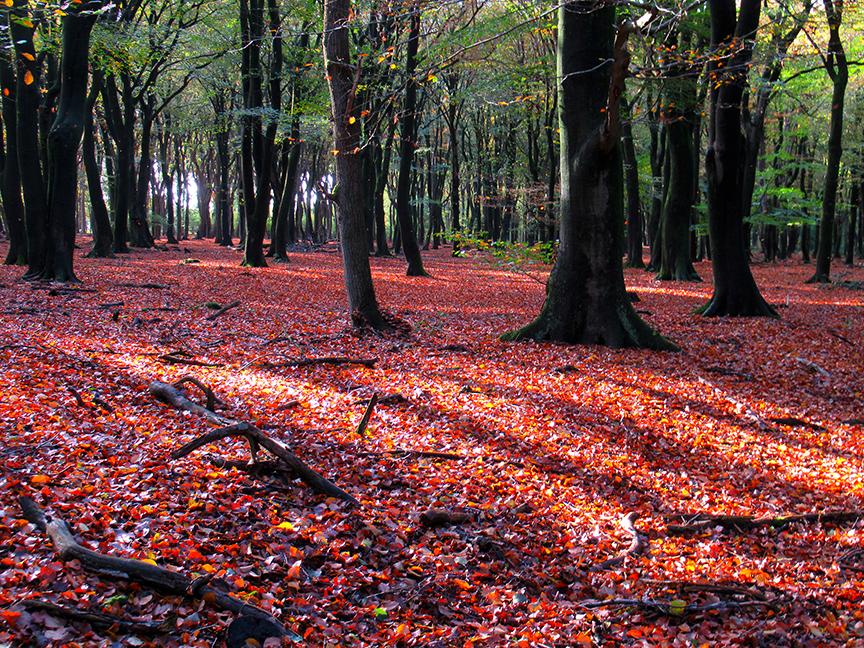 En als dan eventjes de zon door de boomkruinen schijnt is het nog mooier - Foto: ©Louis Fraanje
