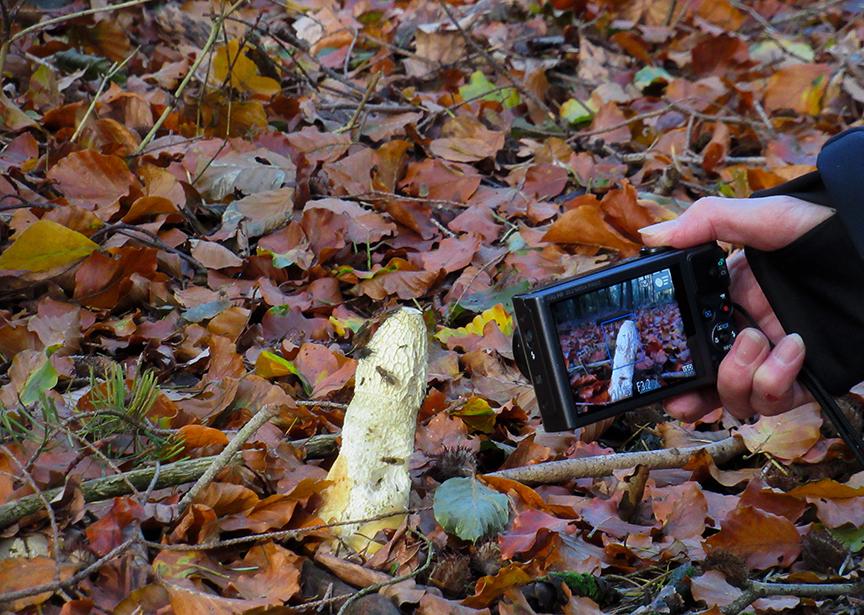 Fransien heeft de stinkzwam dubbel in beeld - Foto: ©Louis Fraanje