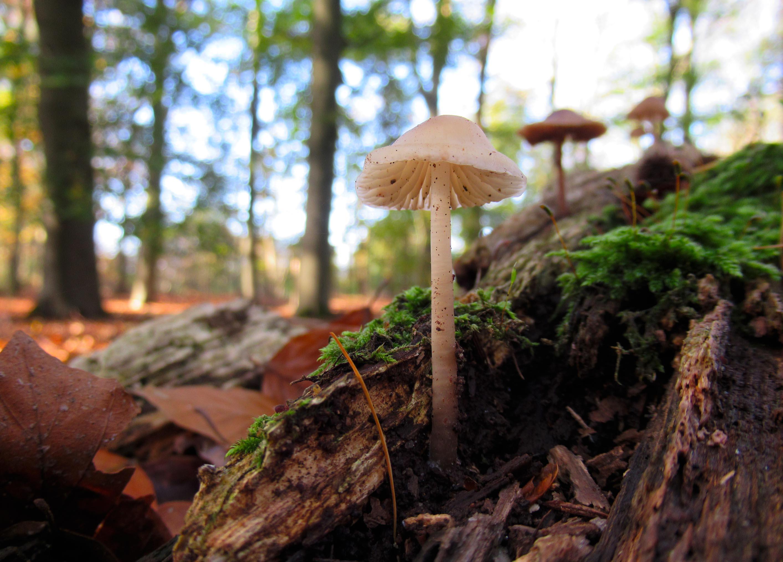 Het is genieten zo laag bij de grond met al die verschillende gesteelde hoedjes- Foto: ©Louis Fraanje