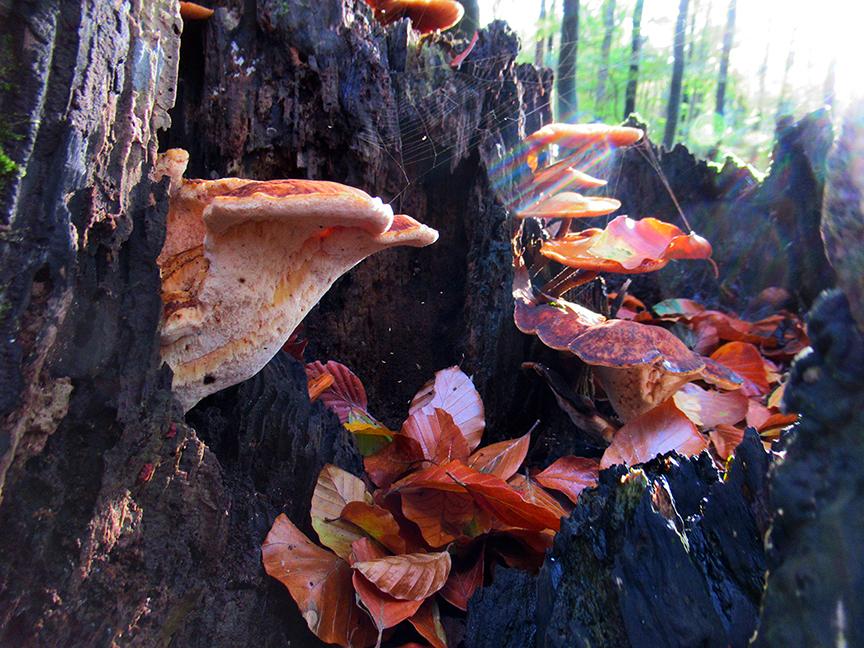 Verschillende soorten paddenstoelen in een verrotte boomstronk - Foto: ©Fransien Fraanje