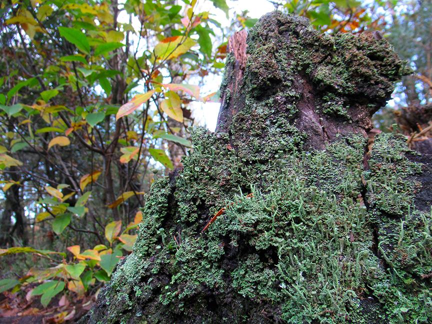Een heleboel bekertjes bij elkaar op de boomstronk - Foto: ©Fransien Fraanje