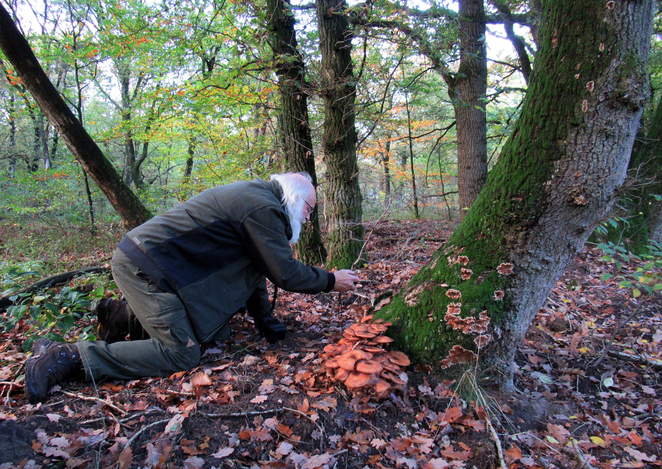 Louis gaat regelmatig door de knieën om de paddenstoelen er zo mooi mogelijk op te krijgen - Foto: ©Fransien Fraanje