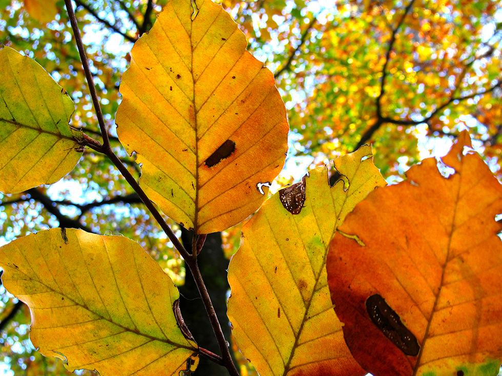 Als je langs de boom omhoog kijkt, sta je ineens 'oog in oog' met een herfstachtig stilleven - Foto: ©Fransien Fraanje
