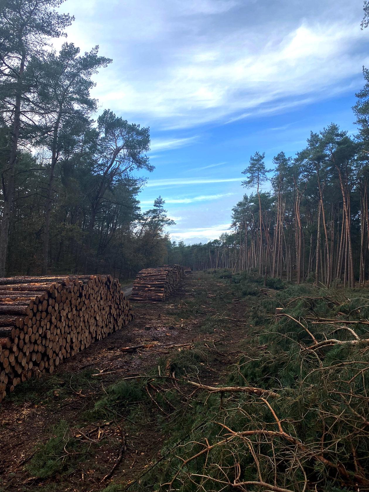 Het omgezaagde hout ligt klaar voor transport - Foto: ©Bert de Haas