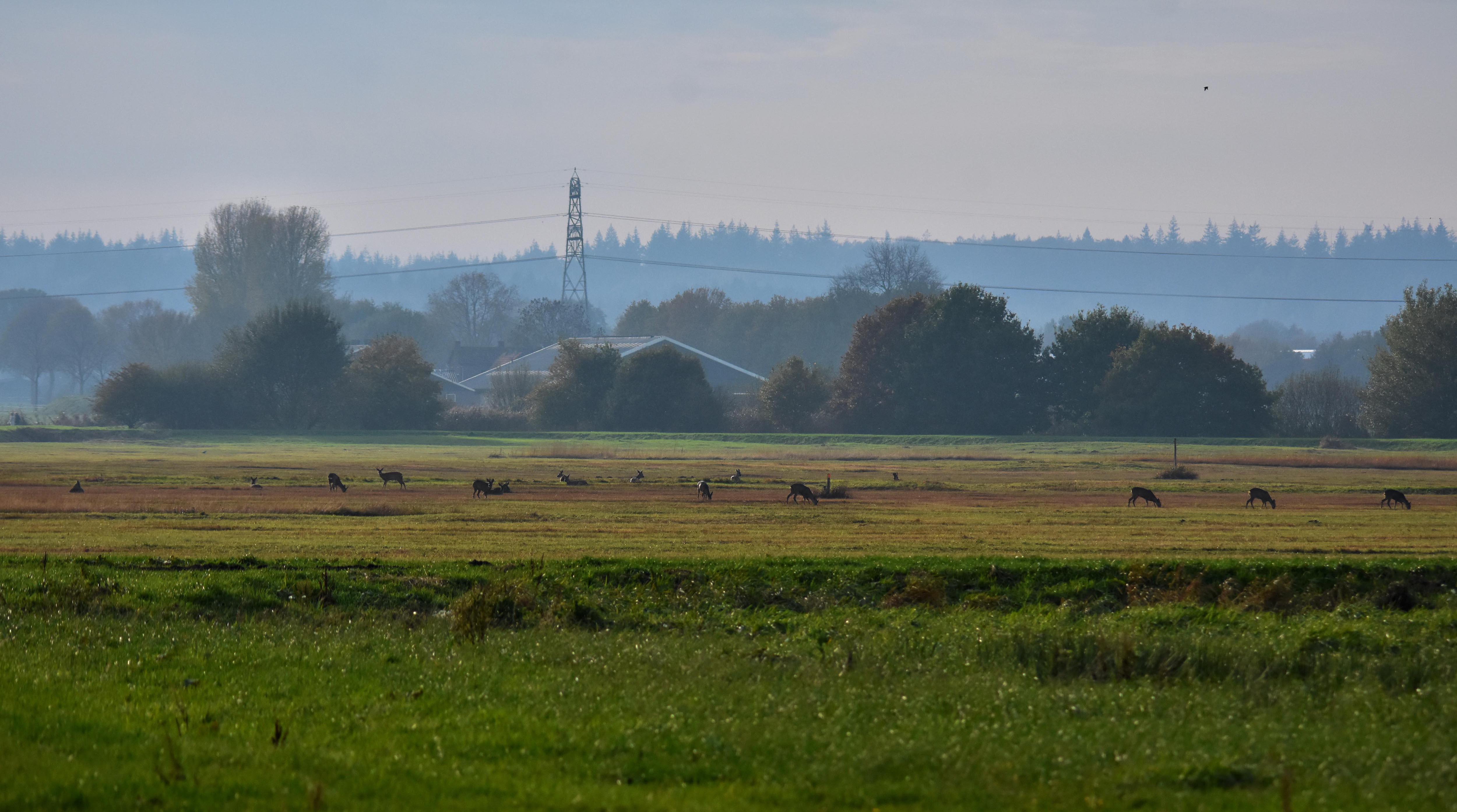 In het open veld tellen we bij elkaar een sprong van 17 reeën – Foto: ©Louis Fraanje