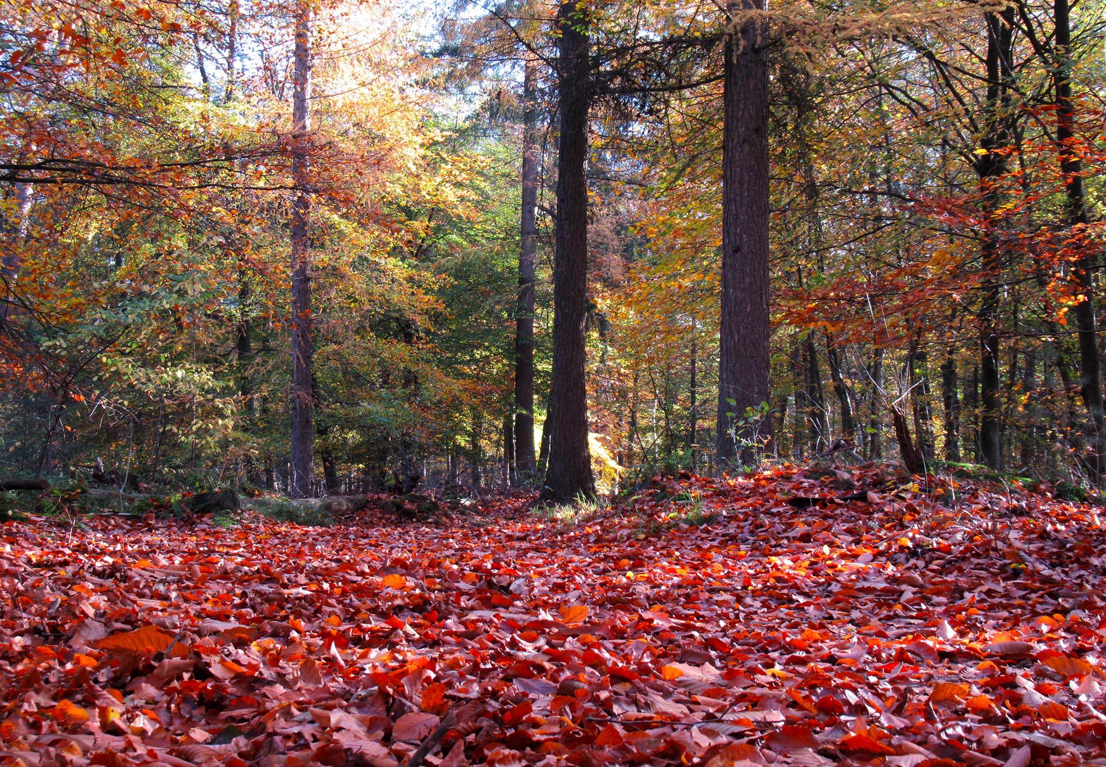Over een rood-bruin tapijt en door een kleurrijk herfstdecor - Foto: ©Fransien Fraanje