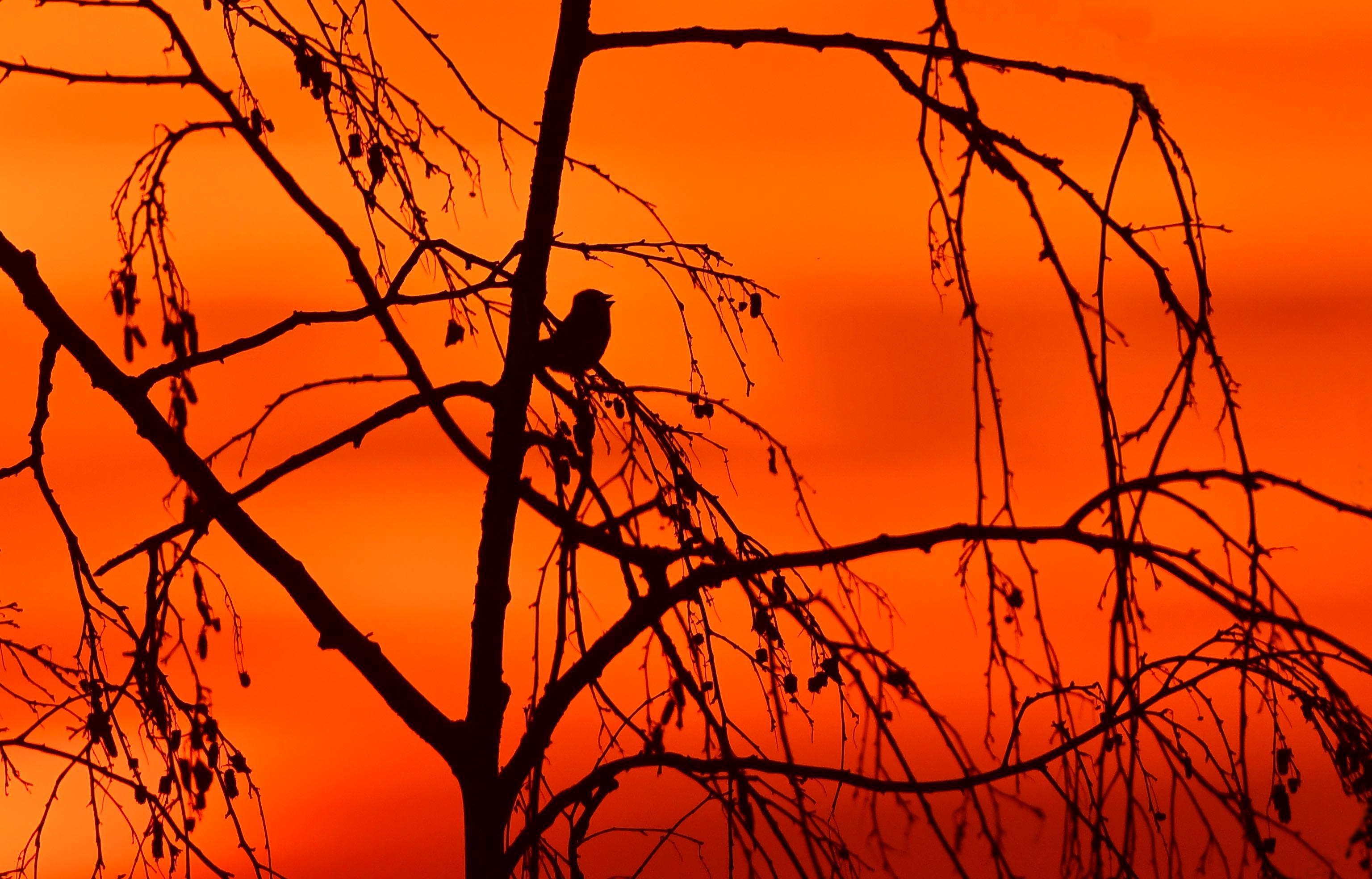 Avondliedje - Een eindje verderop zat boven in een treurberk, een klein vogeltje te zingen. Hoe 'kleurrijker' wil je het nog hebben, samen met zo'n schitterende avondhemel. Met alle dank aan de Schepper van al dit moois! - Foto: ©Louis Fraanje