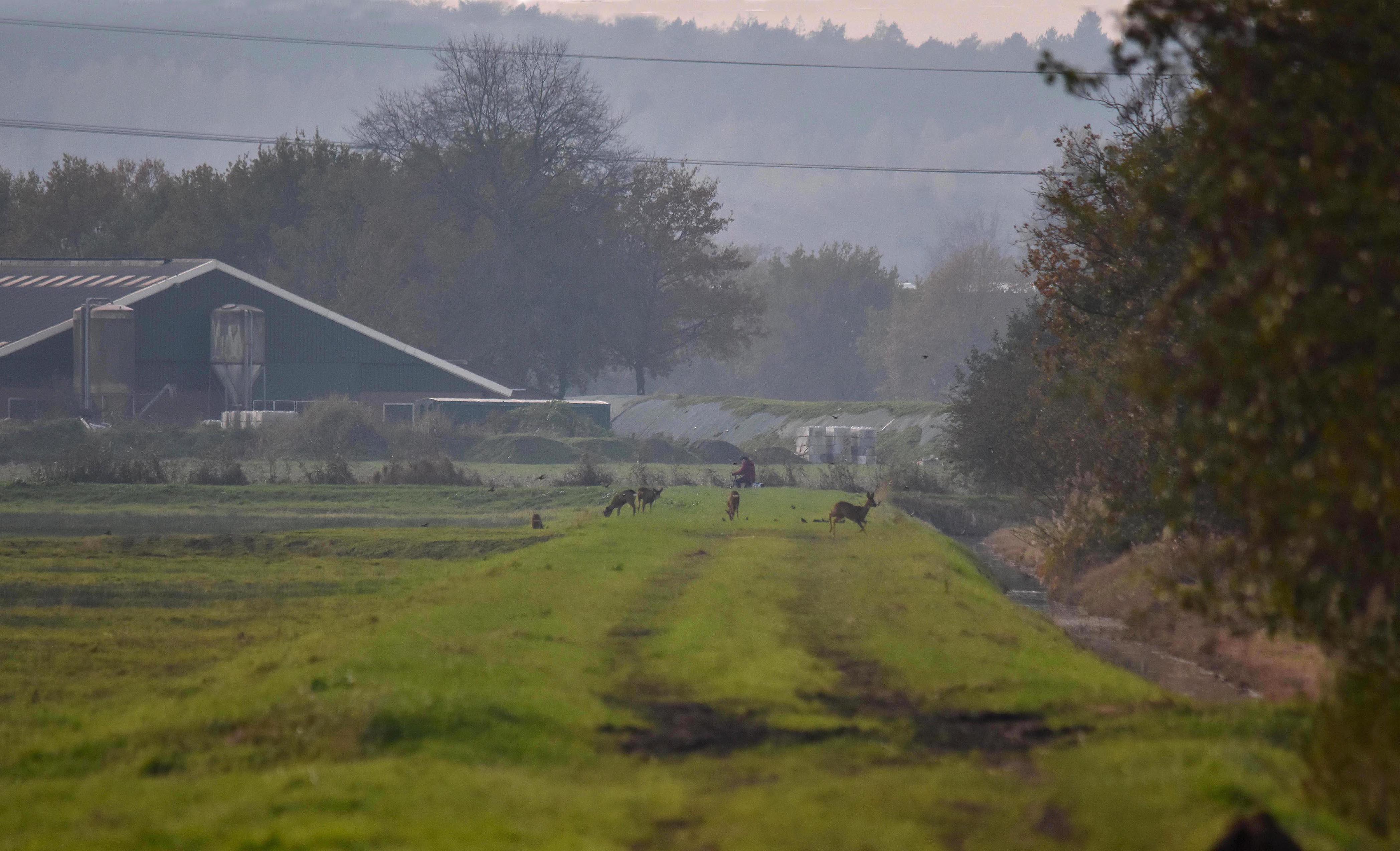 Op een voormalige landweg zien we ook enkelereeën lopen – Foto: ©Louis Fraanje