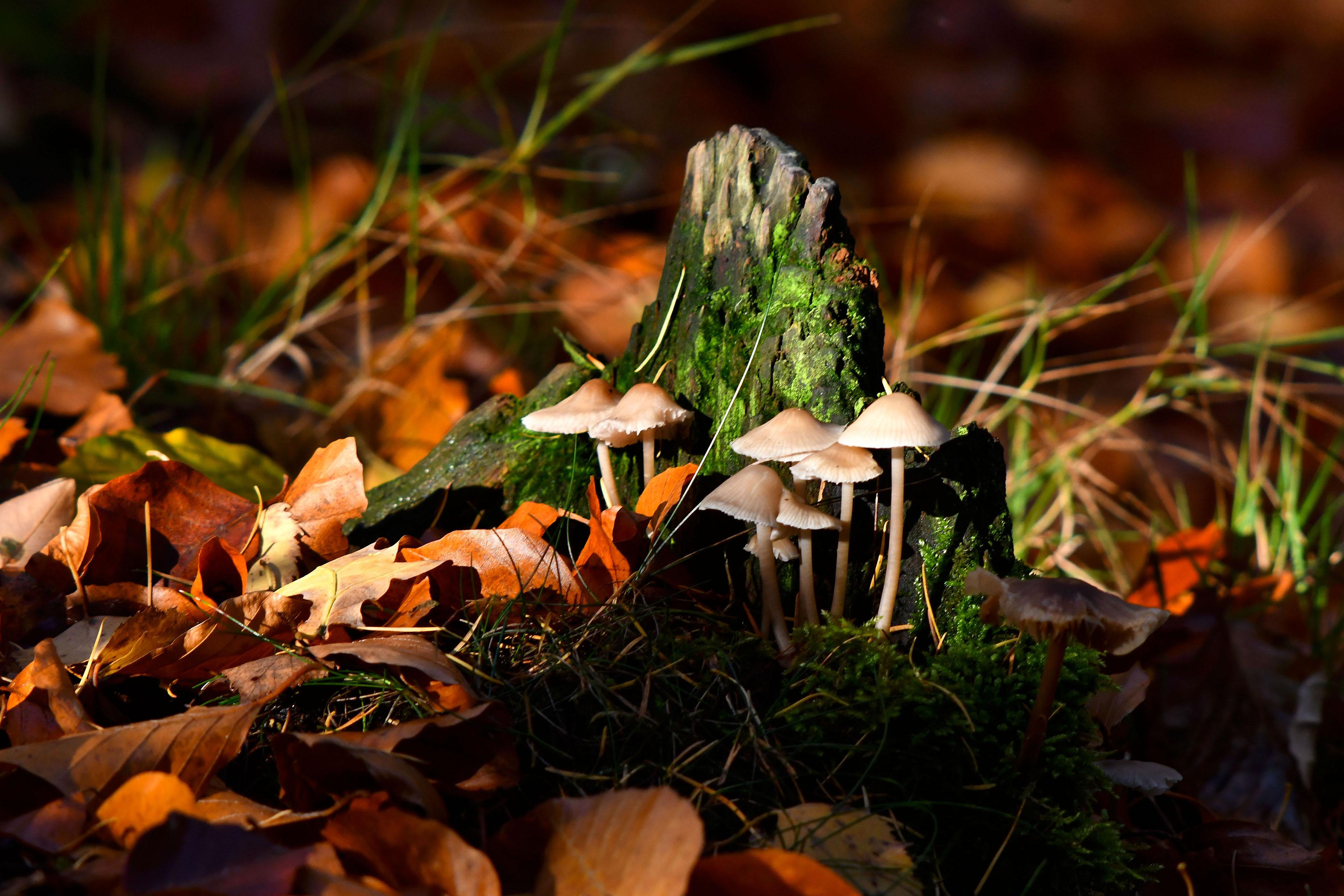 Allemaal kleine hoedjes op een steeltje bij een boomstronk - Foto: ©Louis Fraanje