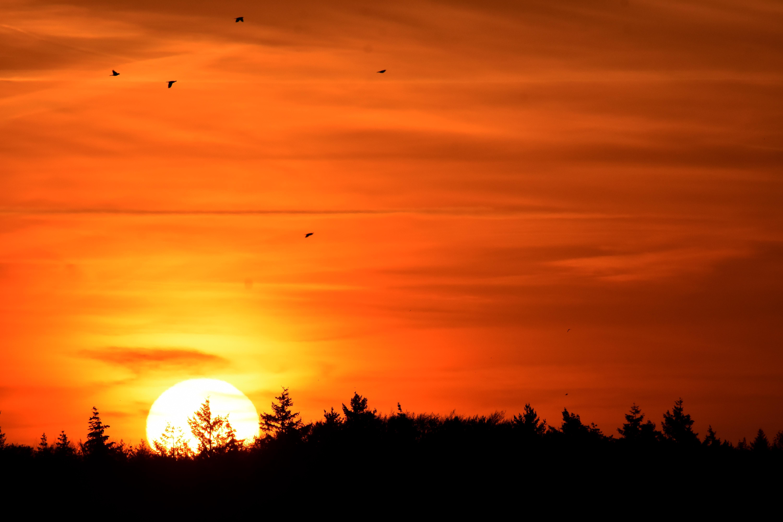 De vogels vliegen hoog in de lucht, terwijl de zon boven de kim van de Veluwe verschijnt - Foto: ©Louis Fraanje