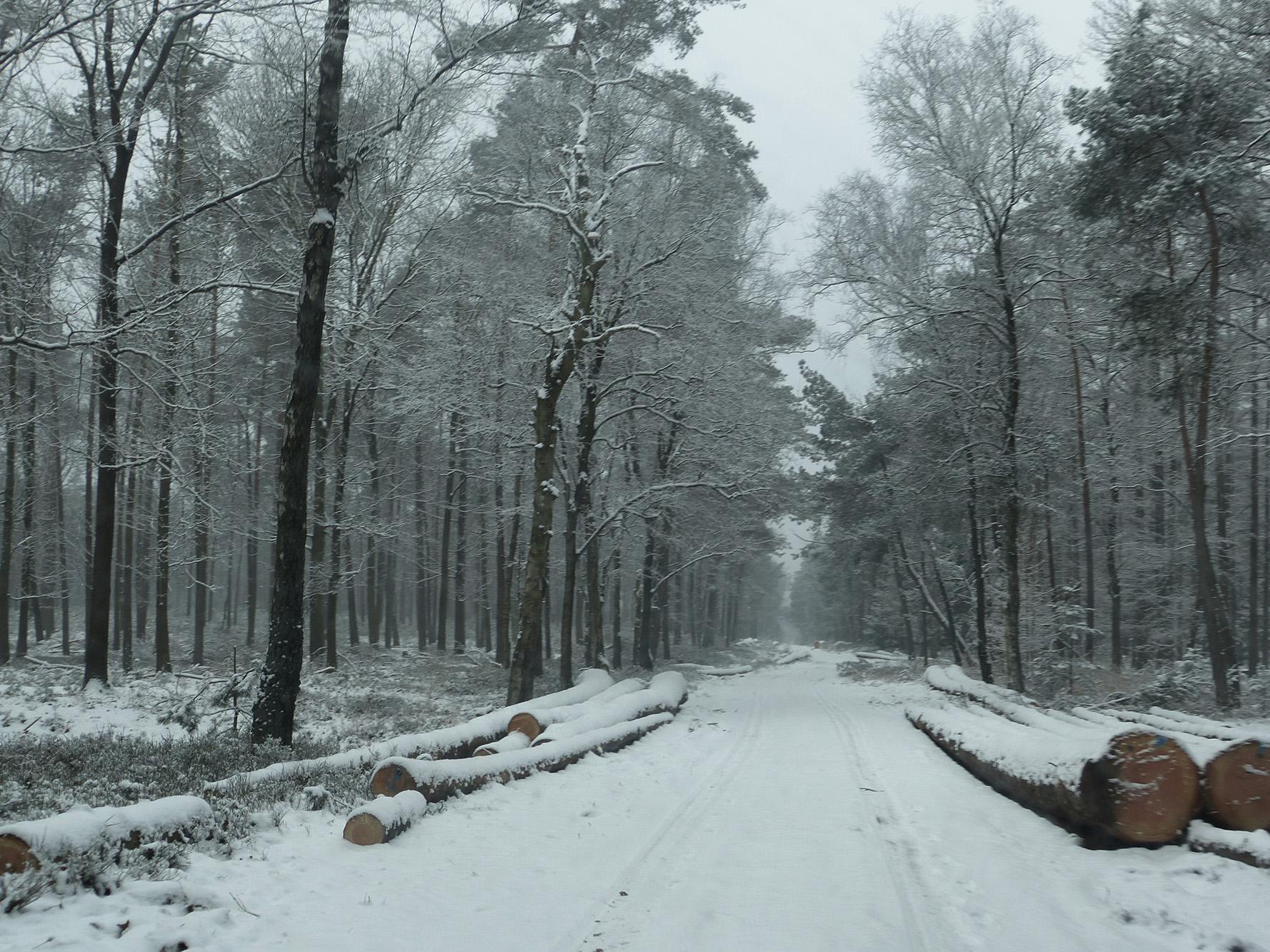 Langs de weg liggen omgezaagde boomstammen te wachten om opgehaald te worden - Foto: ©Louis Fraanje
