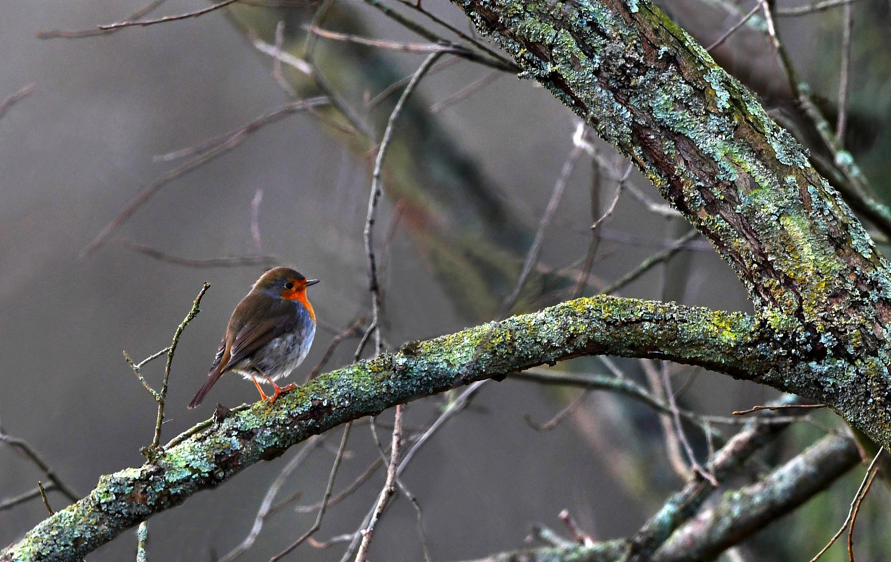 Het kleine vogeltje op die dikke boomtak kijk je bijna dwars door zijn tere pootjes heen - Foto: ©Louis Fraanje