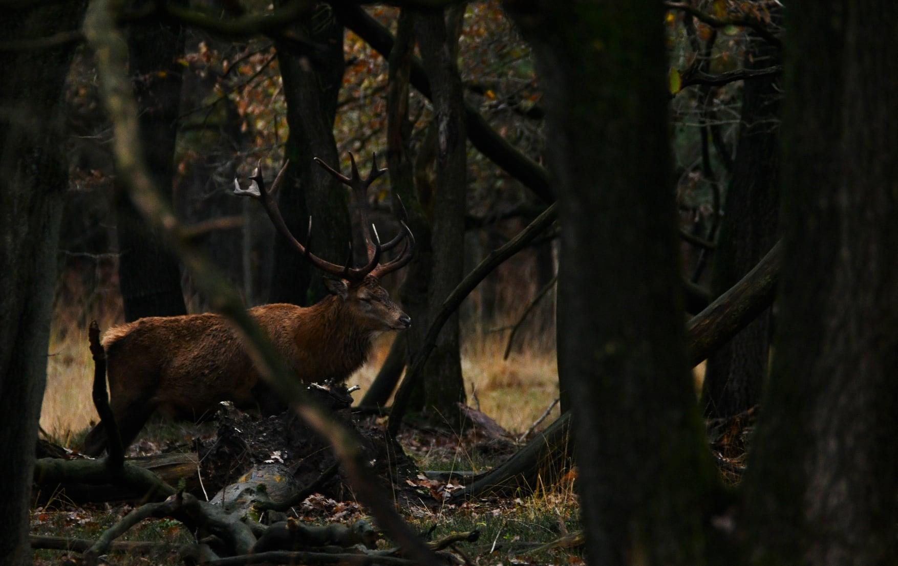 Als eerste zagen we tussen de takken door, de compagnon van Hubertus staan - Foto: ©Nel Vlieland