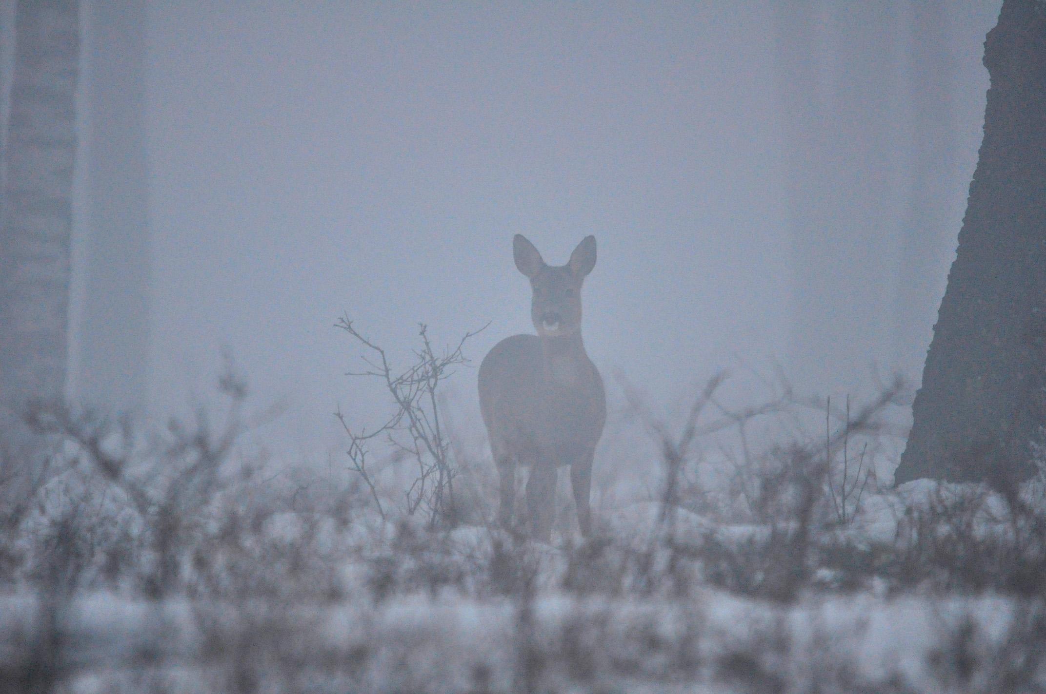 Ze probeert door de mist heen te ontdekken wat daar op het bospad aan de hand is – Foto: ©Louis Fraanje