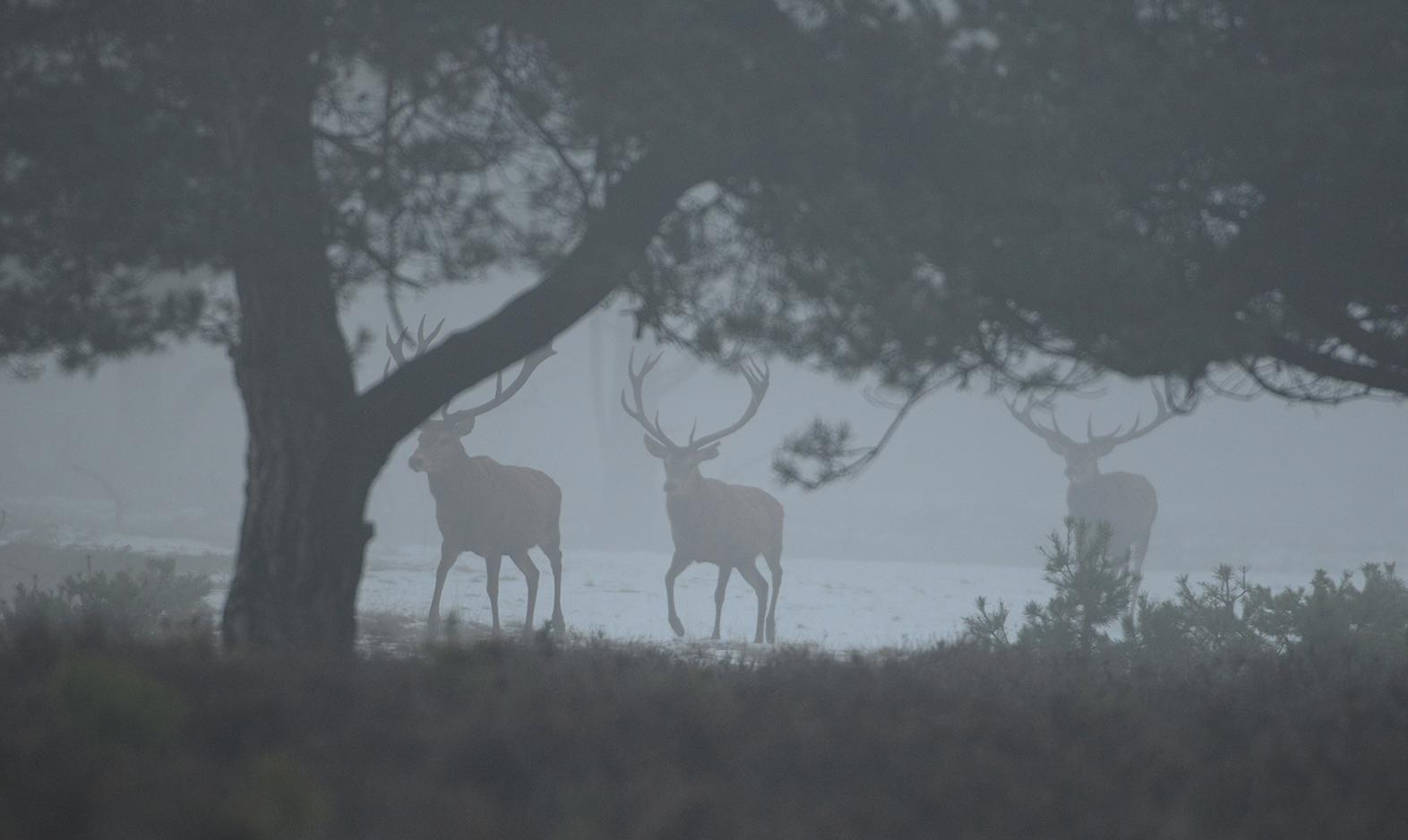 Heel op hun gemak lopen ze in de richting van het oude dennenbos – Foto: ©Fransien Fraanje