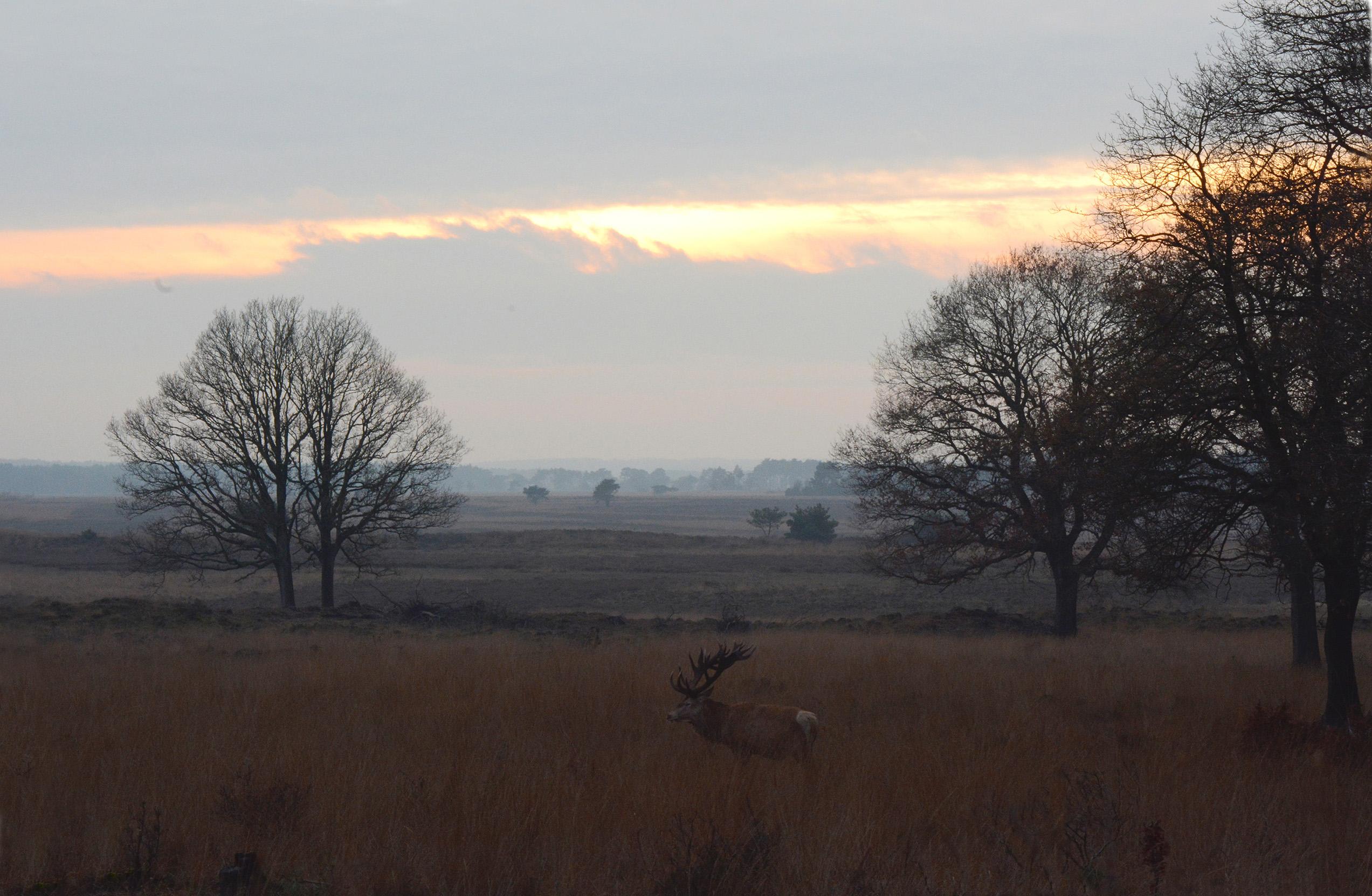 Aan het einde van de middag hadden we nog een mooie zonsondergang - Foto: ©Florus van den Berg