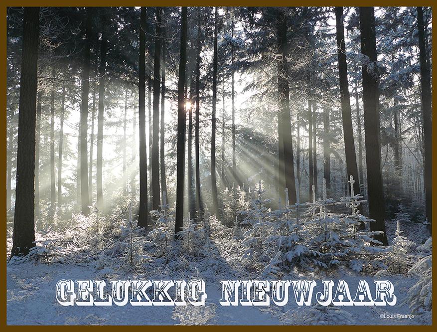 De morgenzon straalt door de bomen van het bos, een nieuwe morgen is aangebroken - Foto: ©Louis Fraanje