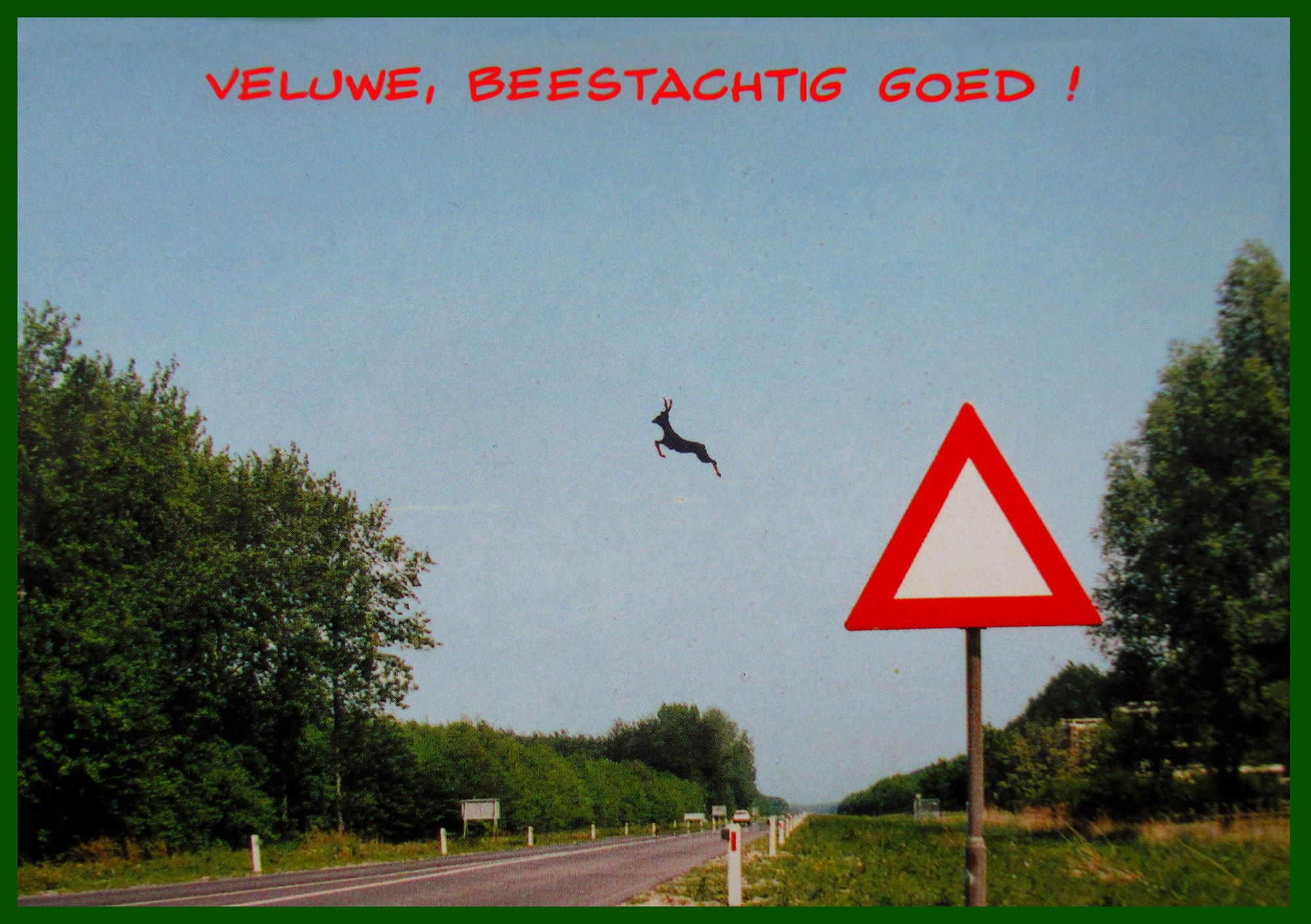 Het hert springt af het waarschuwingsbord - Ansichtkaart Veluwe