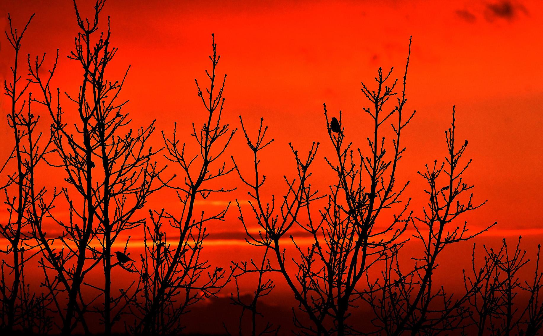 We ontdekken ineens twee kleine vogeltjes boven in de top van de oude eikenboom - Foto: ©Louis Fraanje
