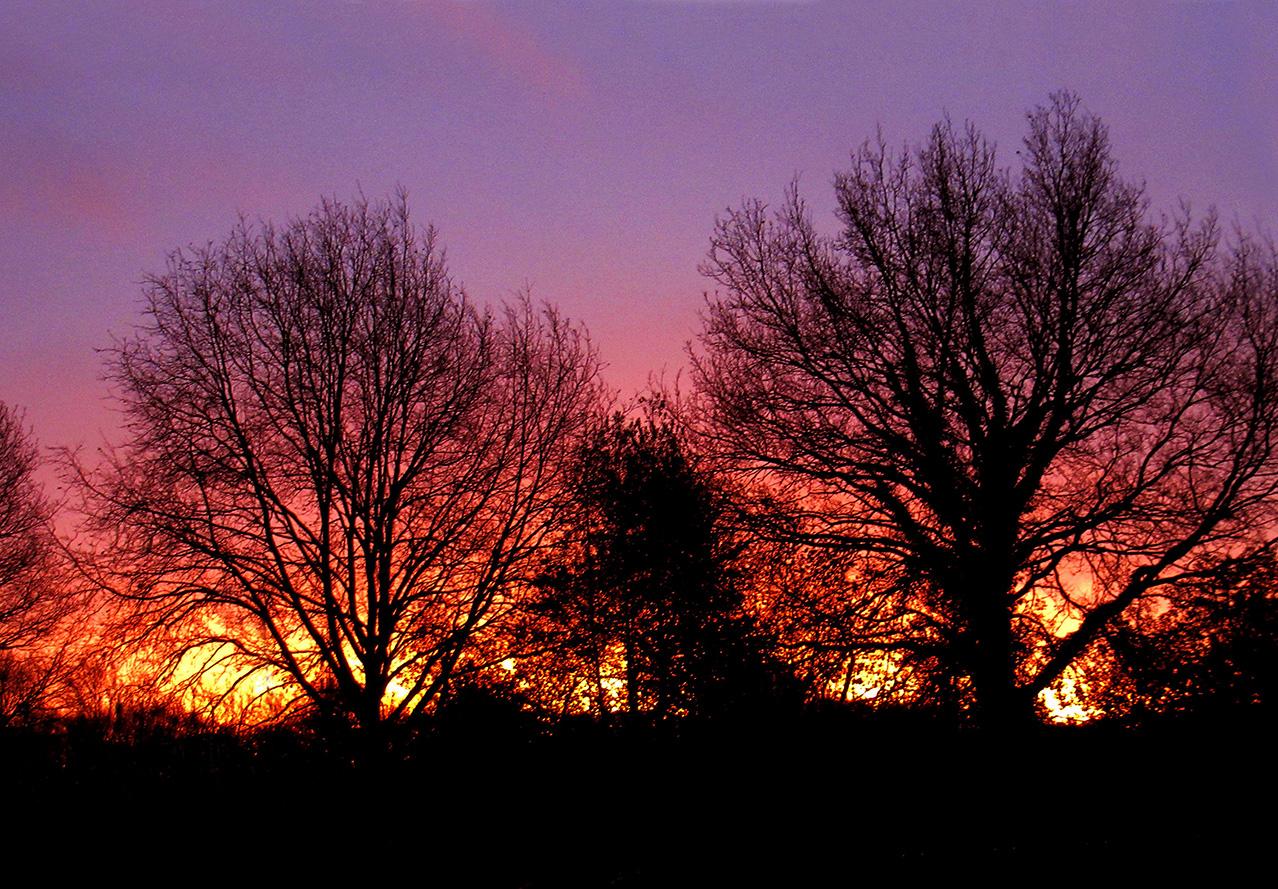 Zonsopkomst tussen de bomen door - Foto: ©Louis Fraanje