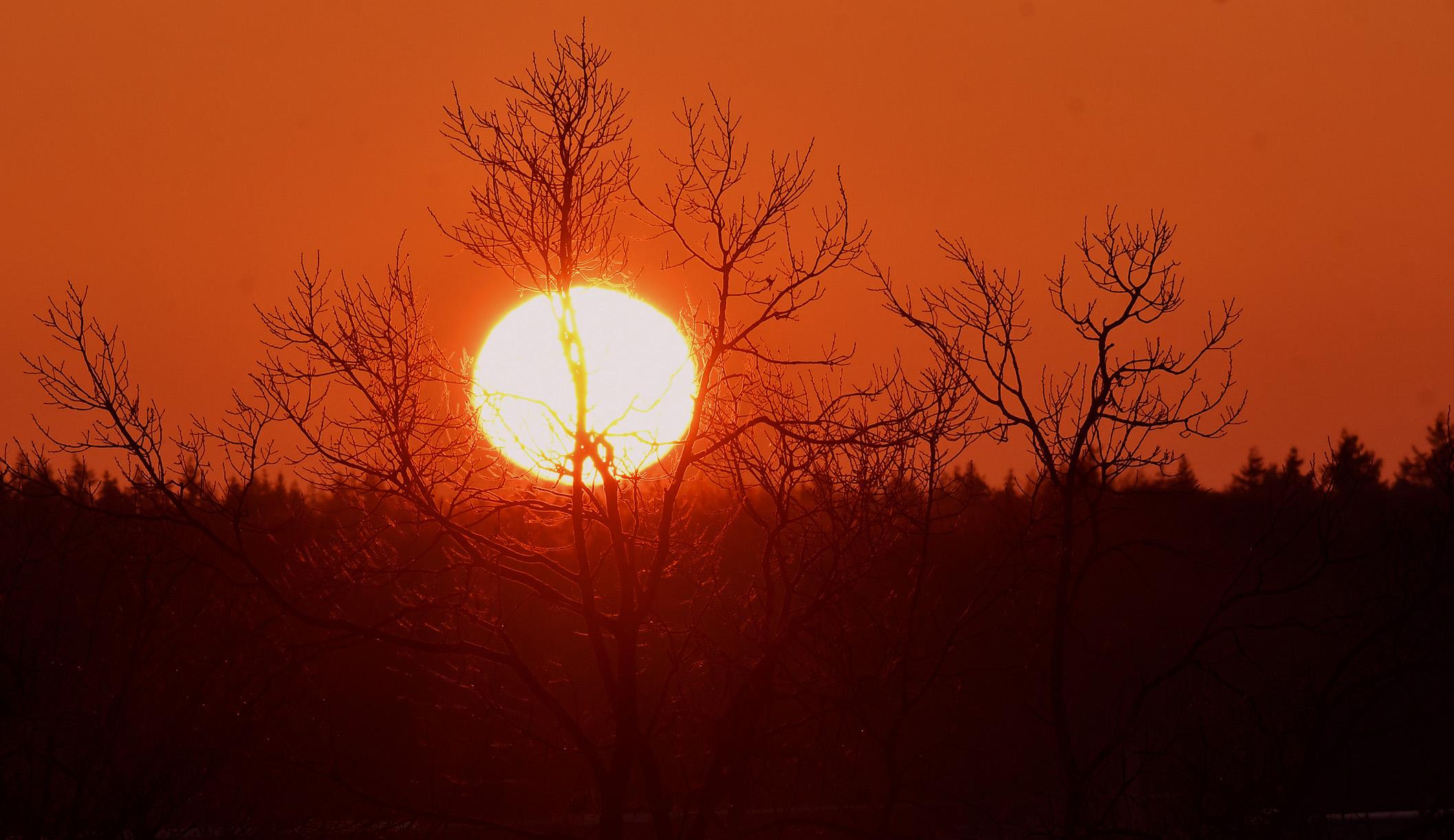 Het leek wel of de zon de kale boomtakken op de voorgrond in goud wilde veranderen - Foto: ©Louis Fraanje